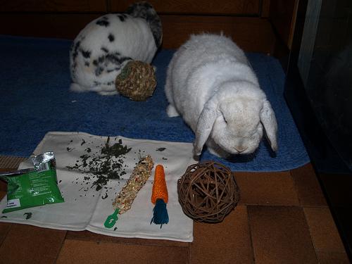 Как сделать игрушку для кролика
